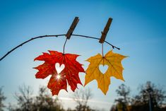autumn, leaf Father, Flag, Canada, Leaves, Child, Autumn, Country, Art, Pai