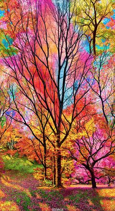 Nature wallpaper - 23 Panel Timeless Treasures Large Scale Electric Forest Sold by the Panel x 44 ) Beautiful Nature Wallpaper, Colorful Wallpaper, Beautiful Landscapes, Beautiful Paintings Of Nature, Colorful Paintings, Tree Paintings, Nature Paintings, Amazing Nature, Beautiful Flowers