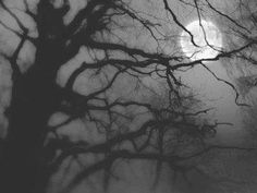 Eerie Moon and tree