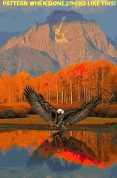Eagle - Beautiful reflection on the water w/the scenery. Eagle - Beautiful reflection on the water w/the scenery. The Eagles, Bald Eagles, Eagles Live, Wild Life, Beautiful Birds, Animals Beautiful, Beautiful Places, Beautiful Scenery, Cool Pictures
