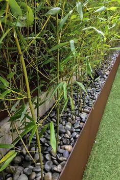 Bali Garden, Side Garden, Bamboo Garden Ideas, Bamboo Garden Fences, Bamboo Hedge, Bamboo Planter, Fence Plants, Patio Plants, Privacy Plants