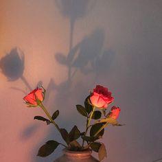 sjowee:  we got pink roses
