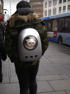 「あれは一体何?」猫を不思議なリュックに入れて歩く男性、街で目撃される(動画)