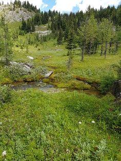 Sunshine Meadows - Rock Isle Lake - Picture of Sunshine Meadows, Banff - Tripadvisor Yoho National Park, National Parks, Mountainous Terrain, Lake Pictures, The Province, Rocky Mountains, Trip Advisor, Fields, Sunshine