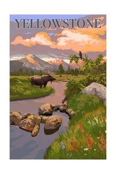 Yellowstone National Park - Moose and Meadow Scene Art Print by Lantern Press at Art.com