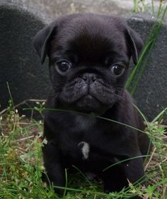 Oh my goodness ! So incredibly cute!