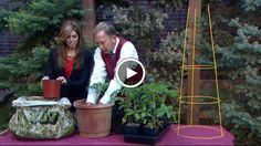 Proctor: Grow great tomatoes