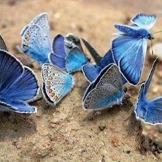 (87) Nature Photobook