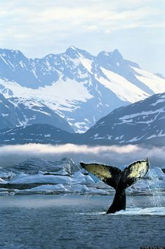 ~~Alaska celebrates 55 years of Statehood | Whale watching in Alaska by Art Wolfe~~