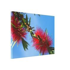 Australian red bottlebrush flower canvas print - red gifts color style cyo diy personalize unique