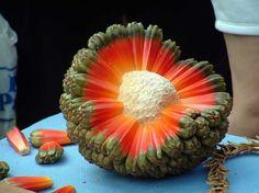 frutas raras 18