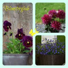 A photo edited with PicMonkey Photo Editor, Nature, Plants, Design, Naturaleza, Plant, Design Comics, Natural