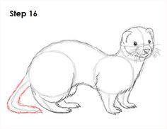 Ferret Drawing 16
