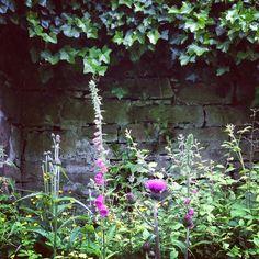 #waterofleith #walkway #naturalbeauty #wildflowers #foxgloves #thistle #ivy #edinburgh #scotland