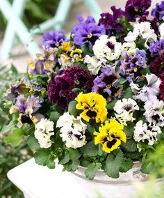 Frilly pansies~