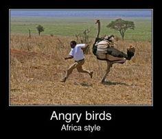 Angry Birds... Real Life