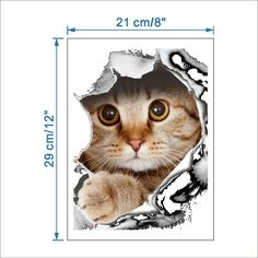 3D Cats Toilet Stickers & Room Decoration