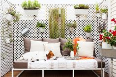 Patio with hanging potted plants and outdoor sofa.