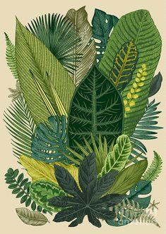 Find Vector Vintage Composition Exotic Leaves Botanical stock images in HD and millions of other royalty-free stock photos, illustrations and vectors in the Shutterstock collection. Botanical Illustration, Illustration Art, Composition Drawing, Exotic Art, Botanical Wall Art, Botanical Prints, Plant Art, Tropical Art, Environmental Art