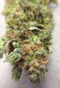 Fresh New Buds In Stock!!!! Banana Karmal- Indica Pooty Tang- Hybrid Giga- Indica Tahoe OG- Hybrid Wally OG- Indica Appalachian Mud Squid- Hybrid Harlequin- Sativa Dominant (High CBD 11%) Zeta Sage- Hybrid Tangerine Haze- Sativa Dominant Jack Cheddar- Sativa Dominant G-13- Hybird Juanita La Lagrimosa(High CBD)- Indica Dominant Grape Skunk x Durban Poison- Hybrid      $9/g  $15/1.75g  $29/8th  $56/7g  $105/14g  $190/oz