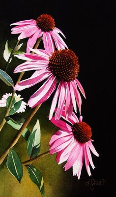 Coneflowers by Jacqueline Gnott in watercolor