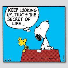 Sigue mirando hacia arriba, ese es el secreto de la vida. keep looking up that's the secret of life