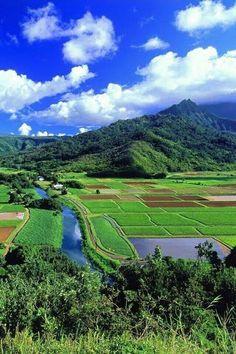 Rural landscape in summer, Japan Beautiful World, Beautiful Places, Japan Summer, Summer Sun, Japan Landscape, Japan Photo, Nagoya, Yokohama, Japan Travel