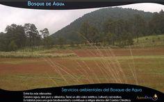 Bosque de Agua vía AgroDer (@AgroDer) | Twitter  #Bosques