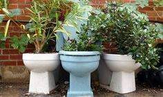 Toilet planter or bbq...what could be better?