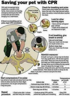 CPR for Pets