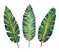 Banana leaves watercolor plant botanic painting on white background, vector illustration - stock photo Watercolor Plants, Watercolor Leaves, Watercolor Paintings, Watercolor Design, Tropical Flowers, Tropical Leaves, Design Set, Leaf Design, Design Floral