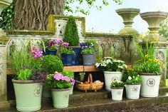 Горшечные растения в саду