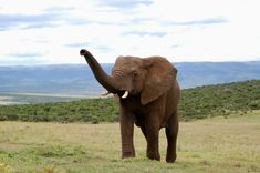 Find the best accommodation in South Africa Best Location, Beautiful Places To Visit, Lodges, South Africa, National Parks, Elephant, Good Things, Cabins, Elephants