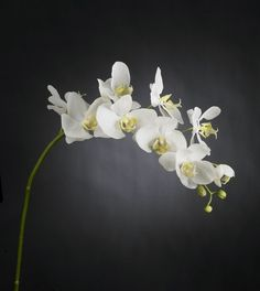 VG NEW TREND Orchidej