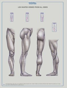 ANATOMY FOR SCULPTORS – 218 photos | VK