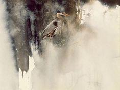 Morten E. Solberg. Животные акварелью. Great Blue Heron