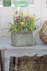 Vibeke Design - table painted with MMSMP Grain Sack or Shutter Grey and Ironstone? The metal container may also have been painted using Luckett's Green and Layla's Mint ? Garden Junk, Garden Pots, Beautiful Gardens, Beautiful Flowers, Rose Bush Care, Vibeke Design, Orange Home Decor, Vintage Planters, Bouquet