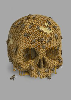 Barry Thomson created this Honey Skull using Photoshop. Memento Mori, Beauty And The Bees, Honeycomb Tattoo, Collage Kunst, Photos Originales, Bee Art, Bees Knees, Skull And Bones, Skull Art