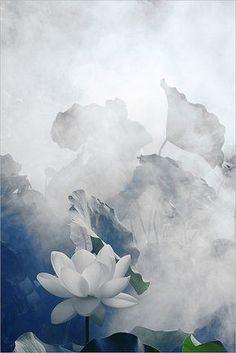 White Lotus Flower - Surreal Series: