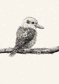 Kookaburra - Giclée Print – Marini Ferlazzo - Art for Wildlife Australian Tattoo, Australian Animals, Australian Artists, Koala Tattoo, Wildlife Tattoo, Animal Sketches, Animal Drawings, Art Drawings, Pencil Drawings