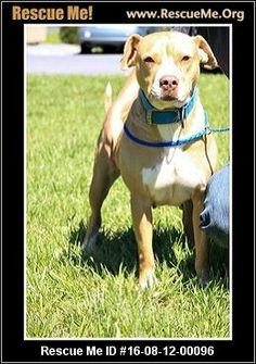 UPDATE:  12/31/2016  Coco is still listed as available for adoption.  ― Tennessee Dog Rescue ― ADOPTIONS ―RescueMe.Org  Coco is an American Staffordshire terrier, who was taken from a cruelty case.  She is sweet and affectionate and must be an only pet.
