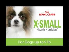 X-SMALL Dog from Royal Canin