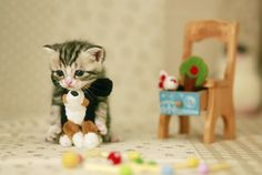 Teacup cat with his small furniture.