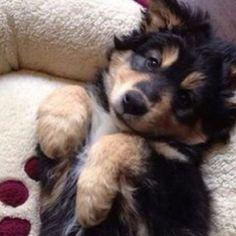 #dog #puppy #baby #photooftheday #cute #petstagram #supercute #dogs #dog #followback #love