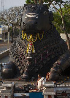 Nandi Bull of Lord Shiva (A giant granite carving, halfway to the top of Chamundi Hills, Mysore, Karnataka, India). Temple India, Hindu Temple, Hampi, Mysore, Mandala Chakra, Places To Travel, Places To Visit, Indian Temple Architecture, Amazing India
