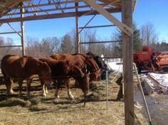 Waiting Horses at Reber Rock Farm, Essex, NY