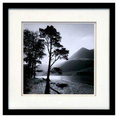 framed black white tree photograph 15x15 target