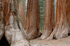 The Importance of Big, Old Trees