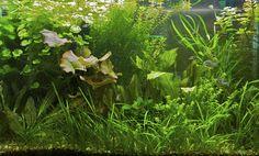 65 gallon planted aquarium