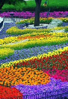Flower Garden Design Ideas: How To Create An Amazing Garden! Most Beautiful Gardens, Beautiful Flowers Garden, Amazing Flowers, Amazing Gardens, Beautiful Places, Rainbow Flowers, Colorful Flowers, Colorful Garden, Rainbow Garden